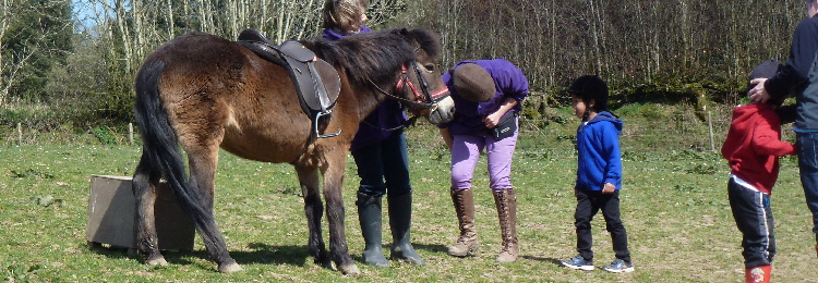 exmoor_pony_centre_events