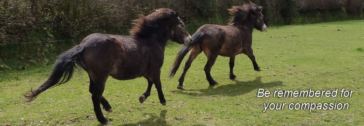 exmoor_pony_leave_a_legacy