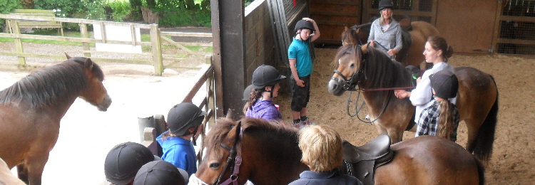 exmoor_pony_centre_group_fun